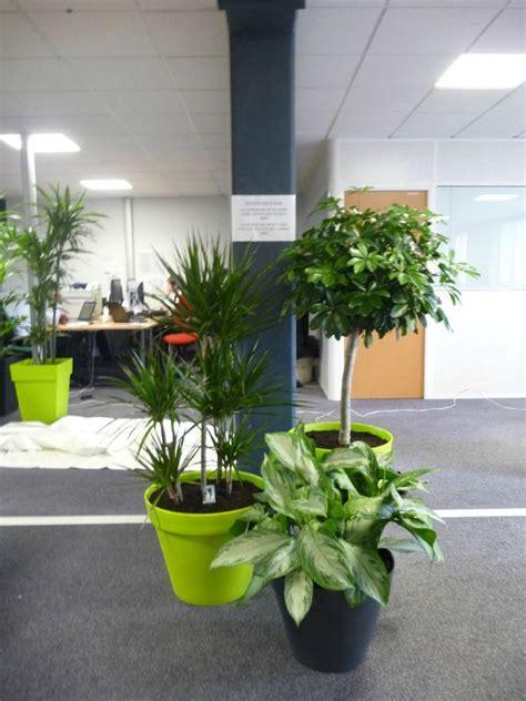 plantes pour bureau lupin c 39 est aussi la mise en place de plantes