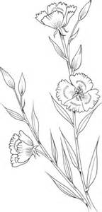 clarkia amoena farewell  spring coloring page supercoloringcom