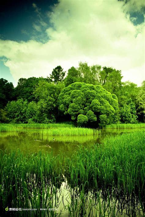 青葱的树林高清图片 - 素材公社 tooopen.com