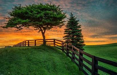 Sunset Summer Field Nature Fence Wallpapers Tree