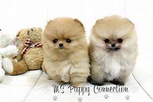 ms puppy connection