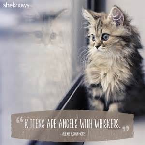 cat sayings 50 cat quotes that only feline would understand