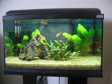 aquarium eau douce 60l