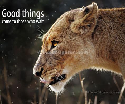 inspirational quotes lion lioness quotesgram