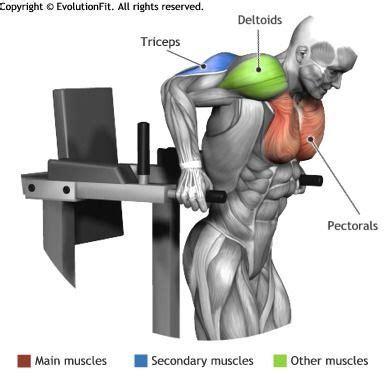 Dips Chaise Pectoraux by Pectoraux Muscles Utilis 233 S Pour L Entra 238 Nement Repulsion
