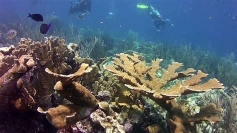 perfect day  scuba diving  curacao youtube