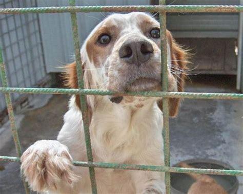 Cani In Gabbia - canile alba inadempiente il comune di pomezia
