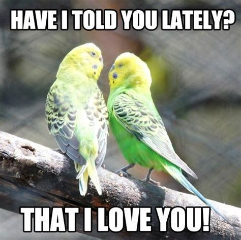 Cute I Love You Meme - love memes funny i love you memes for her and him