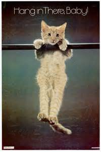 motivational cat posters let s start monday with 10 non motivational cats catster
