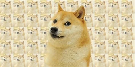 New Doge Meme - the doge meme is back and this time it s liquified