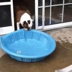 Piscine Plastique Rigide : gus le bulldog qui veut vraiment une piscine int rieure ~ Voncanada.com Idées de Décoration