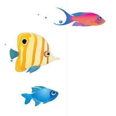Fish Swimming Clipart Transparent Splash Animated Animation