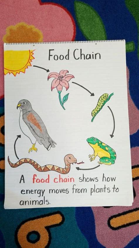 grade food chain anchor chart