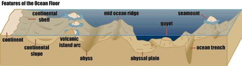 Facts About The Ocean Floor by Ocean Facts