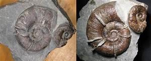 Capaplex Von Caparol : die fossilien community fossilien einlassen ein berblick ber g ngige mittel ~ Markanthonyermac.com Haus und Dekorationen