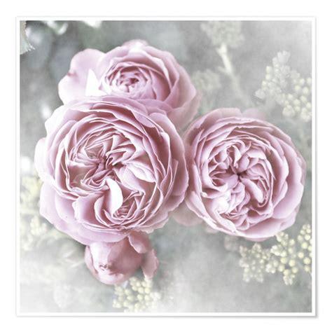 cuadro tris rose shabby posters et tableaux de roses de style shabby posterlounge fr