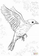 Flying Bird Coloring Drawing Draw Birds Pages Realistic Flight Printable Simple Step Supercoloring Drawings Easy Sketch Cuckoo Tutorials Getdrawings Bluebird sketch template