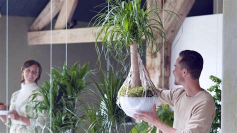 pflanzen als raumteiler pflanzen als raumteiler wohnen hamburger abendblatt
