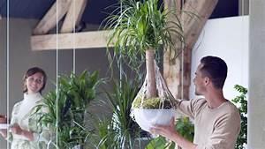 Pflanzen Als Raumteiler : pflanzen als raumteiler wohnen hamburger abendblatt ~ Sanjose-hotels-ca.com Haus und Dekorationen