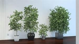 Pflanzen Für Wohnzimmer : pflegeleichte zimmerpflanzen 18 vorschl ge ~ Markanthonyermac.com Haus und Dekorationen