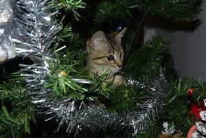 Le Sapin A Les Boules : le chat pin de no l la t te dans les toiles ~ Preciouscoupons.com Idées de Décoration