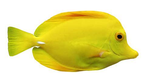 jeux gratuit de cuisine et de coiffure les cliparts de clo poisson jaune