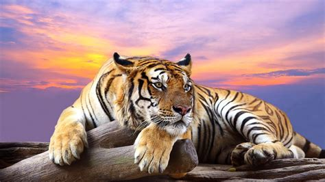 Wild Animal Wallpapers Group With 19 Items