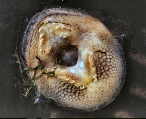 algae eaters  freshwater fish tanks petsladycom