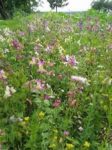 Welche Blumen Für Bienen : ogv viele kleine bl hwiesen familienfest beendet jahresaktion bienen paradiese ~ Eleganceandgraceweddings.com Haus und Dekorationen
