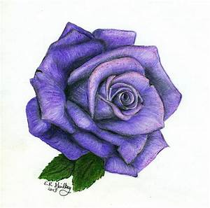 Purple Rose Drawing Images & Pictures - Becuo | Suluboya4 ...