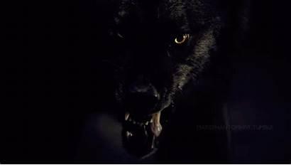 Lobisomem Wattpad Werewolf Lobo Loup Vampire Garou