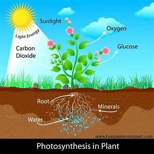 House Plant Lighting Guide