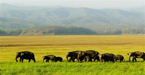 manas national park handy guide travelers visit