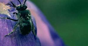 Was Hilft Gegen Wespen : wespen wespen wespen was wirklich gegen die nervigen brummer hilft web de ~ Whattoseeinmadrid.com Haus und Dekorationen