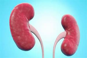 Your Guide To Chronic Kidney Disease Staging