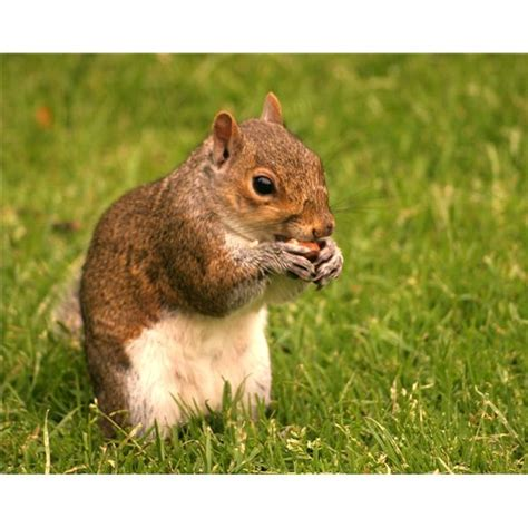 squirrel activities for preschoolers lois ehlert lesson 940 | 54ac1e90f40dd0d90630490d661336fbda732fdf large