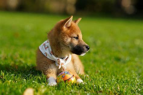 Dogecoin Volumes Spike 1,900% in 2 Days Amid Viral TikTok ...