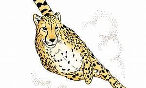 Cheetahs U0026 39  Inner Ear Is One