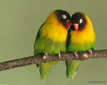 Birds Romantic Background Funny