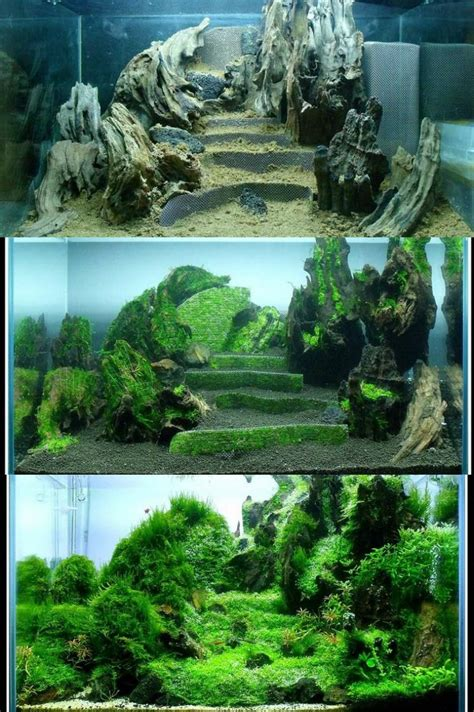 Aquascape Ideas by Pin By Rachael On Aquascapes Nature Aquarium