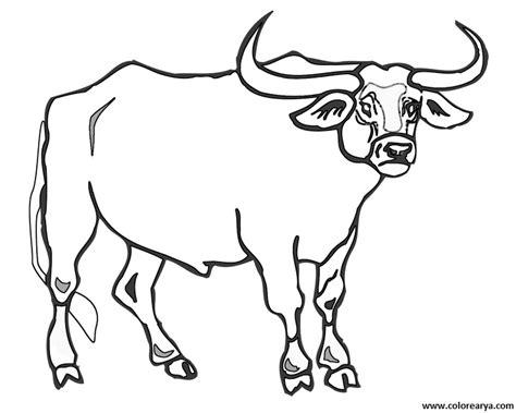 Bull Coloring Page - Democraciaejustica