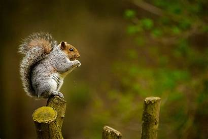 Squirrel Hunting Squirrels Unsplash Young Shane Through