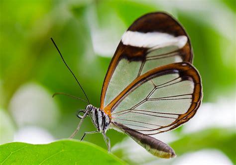 Botanischer Garten München Exotische Schmetterlinge by Tropische Schmetterlinge Im Botanischen Garten M 252 Nchen
