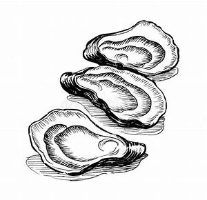 Oysters stock illustration. Illustration of drawing ...