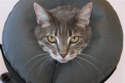 Cat Elizabethan Collar