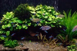 Environmentally Friendly Aquariums