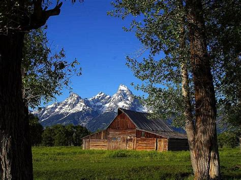 picture mormon row barns grand teton park
