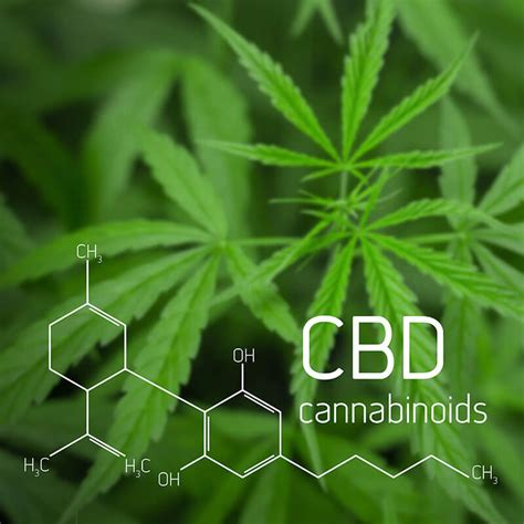 What is CBD - Cannabidiol? - Essence Cannabis Dispensary