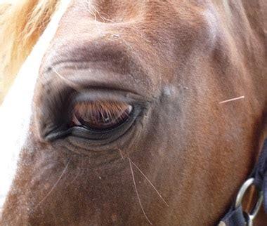 kleintier und pferdepraxis pichlingstainz