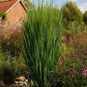 Schattenpflanzen Garten Winterhart : die besten 17 ideen zu gr ser auf pinterest outdoor pflanzen topfpflanzen terrasse und ~ Sanjose-hotels-ca.com Haus und Dekorationen